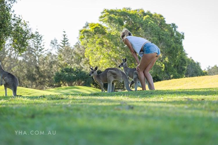 Yamba YHA - Kangaroos on the Golf Course